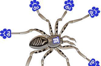 站长爱蜘蛛